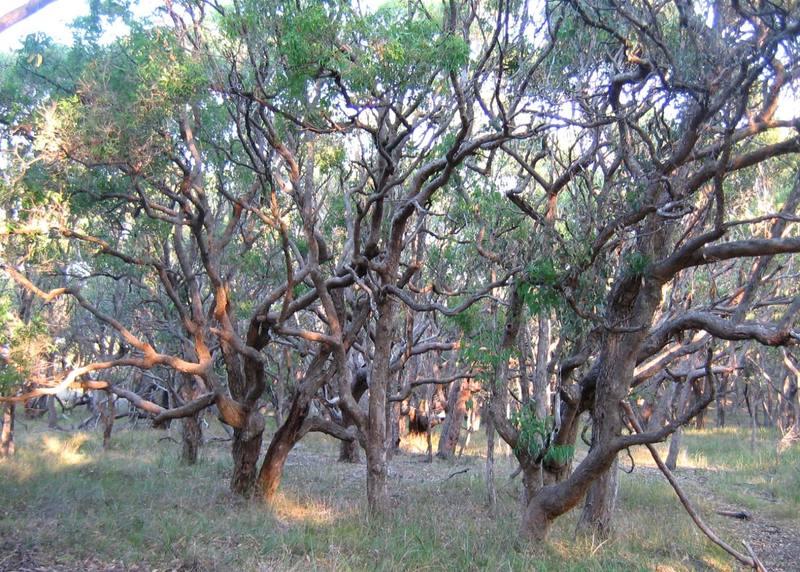 Tangled_trees